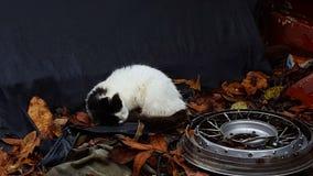 Naptime di Kitty fotografia stock