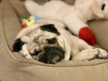 Naptime- slaperig leuk pug geknuffelspeelgoed in zijn bed stock fotografie
