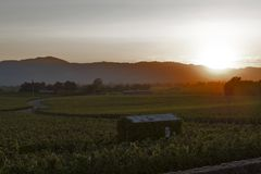 Napy doliny krajobraz przy zmierzchem, Kalifornia, usa zdjęcie royalty free