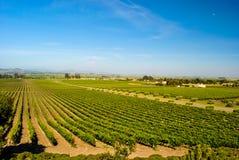 Napy doliny winnica Fotografia Royalty Free
