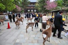 Nara Imagen de archivo libre de regalías