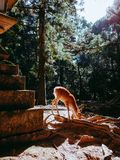 Nara Deer images libres de droits