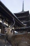 Nara Deer Stock Afbeeldingen