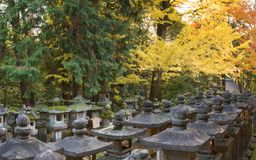 Nara foliage Royalty Free Stock Photo