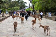 Nara, Japan Stockfotografie