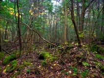 Nara, Japan - 26. Juli 2017: Ansicht des Waldes mit irgendeinem Stamm, Büsche und Niederlassungen im Herbst parken in Kyoto Stockfotos