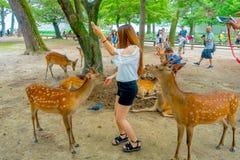 Nara Japan - Juli 26, 2017: Besökare matar lösa hjortar i Nara, Japan Nara är en viktig turismdestination i Japan - Arkivfoto
