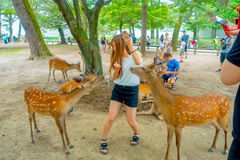 Nara Japan - Juli 26, 2017: Besökare matar lösa hjortar i Nara, Japan Nara är en viktig turismdestination i Japan - Fotografering för Bildbyråer