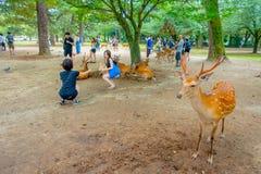 Nara Japan - Juli 26, 2017: Besökare som tar picturtes med lösa hjortar i Nara, Japan Nara är en viktig turism Royaltyfri Foto