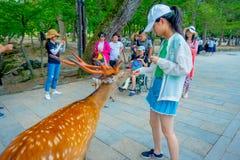 Nara Japan - Juli 26, 2017: Den oidentifierade kvinnan som bär en hatt, matar en lös hjort i Nara, Japan Nara är ett viktigt Fotografering för Bildbyråer