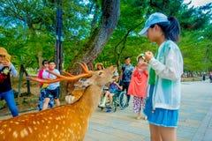Nara Japan - Juli 26, 2017: Den oidentifierade kvinnan som bär en hatt, matar en lös hjort i Nara, Japan Nara är ett viktigt Arkivbilder