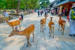 Nara Japan - Juli 26, 2017: Det oidentifierade folket som omkring går med några lösa deers i Nara, parkerar i Japan Nara är a Arkivfoto