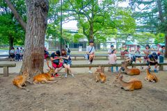 Nara Japan - Juli 26, 2017: Lösa deers för oidentifierad folkaropund i Nara, Japan Nara är en viktig turismdestination Arkivfoton