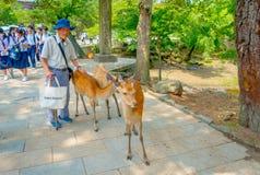 Nara Japan - Juli 26, 2017: Oidentifierad gamal man som trycker på en lös hjort i Nara Park, Japan Nara är en viktig turism Royaltyfri Fotografi