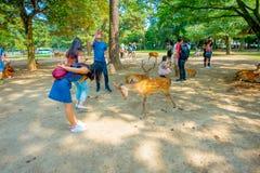 Nara Japan - Juli 26, 2017: Oidentifierad kvinna som bär en jeanklänning som spelar med några lösa hjortar i Nara, Japan nara Arkivfoton
