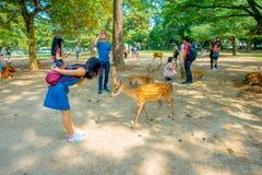 Nara Japan - Juli 26, 2017: Oidentifierad kvinna som bär en jeanklänning som spelar med några lösa hjortar i Nara, Japan nara Royaltyfri Bild