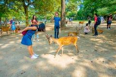 Nara Japan - Juli 26, 2017: Oidentifierad kvinna som bär en jeanklänning som spelar med några lösa hjortar i Nara, Japan nara Royaltyfria Bilder