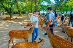 Nara Japan - Juli 26, 2017: Oidentifierad kvinna som bär en vit t-skjorta som matar en lös hjort i Nara, Japan Nara är a Fotografering för Bildbyråer