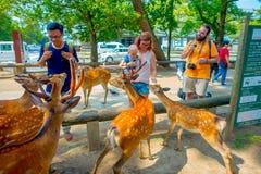 Nara Japan - Juli 26, 2017: Oidentifierad kvinna som trycker på en lös hjort i Nara, Japan Nara är en viktig turismdestination Royaltyfri Foto