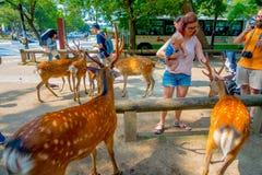Nara Japan - Juli 26, 2017: Oidentifierad kvinna som trycker på en lös hjort i Nara, Japan Nara är en viktig turismdestination Arkivfoton