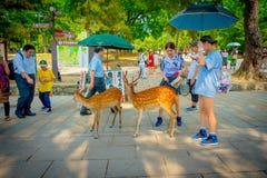 Nara Japan - Juli 26, 2017: Oidentifierade kvinnor som tycker om en grupp av lösa deers i Nara, Japan Nara är en viktig turism Arkivbilder