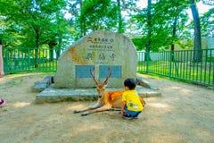 Nara Japan - Juli 26, 2017: Oidentifierat barn som bär en gul t-skjorta som loiking en lös hjort i Nara, Japan Nara är a Royaltyfri Fotografi