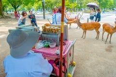 Nara Japan - Juli 26, 2017: Oidentifierat folk runt om lösa deers i Nara, Japan Nara är en viktig turismdestination Royaltyfri Fotografi