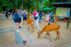 Nara Japan - Juli 26, 2017: Oidentifierat folk runt om lösa deers i Nara, Japan Nara är en viktig turismdestination Arkivfoto