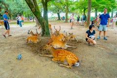 Nara Japan - Juli 26, 2017: Oidentifierat folk runt om lösa deers i Nara, Japan Nara är en viktig turismdestination Arkivbild