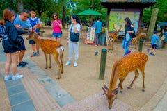 Nara Japan - Juli 26, 2017: Oidentifierat folk runt om lösa deers i Nara, Japan Nara är en viktig turismdestination Royaltyfria Bilder