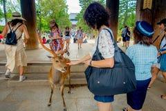 Nara Japan - Juli 26, 2017: Oidentifierat folk som matar en lös hjort i Nara, Japan Nara är en viktig turismdestination Fotografering för Bildbyråer