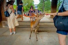 Nara Japan - Juli 26, 2017: Oidentifierat folk som matar en lös hjort i Nara, Japan Nara är en viktig turismdestination Arkivfoto