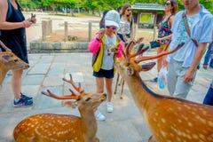 Nara Japan - Juli 26, 2017: Oidentifierat folk som matar en lös hjort i Nara, Japan Nara är en viktig turismdestination Royaltyfri Foto