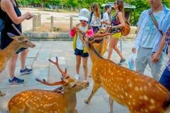Nara Japan - Juli 26, 2017: Oidentifierat folk som matar en lös hjort i Nara, Japan Nara är en viktig turismdestination Arkivbild