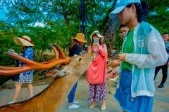 Nara Japan - Juli 26, 2017: Oidentifierat folk som matar en lös hjort i Nara, Japan Nara är en viktig turismdestination Royaltyfri Bild