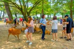 Nara Japan - Juli 26, 2017: Oidentifierat folk som omkring går av lösa deers i Nara, Japan Nara är en viktig turism Royaltyfria Bilder