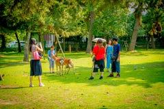 Nara Japan - Juli 26, 2017: Oidentifierat folk som tar bilder av lösa hjortar i Nara, Japan Nara är en viktig turism Royaltyfria Foton
