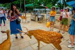 Nara Japan - Juli 26, 2017: Oidentifierat folk som tar bilder och tycker om de lösa deersna i Nara, Japan Nara är a Arkivfoton