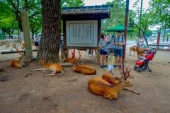 Nara Japan - Juli 26, 2017: Oidentifierat folk som tycker om och tar bilder av lösa deers i Nara, Japan Nara är a Arkivbild