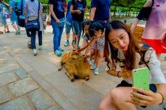 Nara Japan - Juli 26, 2017: Stäng sig upp av den oidentifierade kvinnan som tar en selfie av en lös hjort i Nara, Japan Nara är a Royaltyfria Bilder