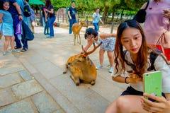 Nara Japan - Juli 26, 2017: Stäng sig upp av den oidentifierade kvinnan som tar en selfie av en lös hjort i Nara, Japan Nara är a Royaltyfri Foto