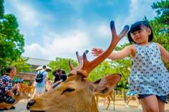 Nara Japan - Juli 26, 2017: Stående av en härlig lös hjort med lite flickan bakom i Nara, Japan Nara är ett viktigt Royaltyfri Fotografi