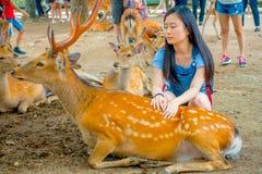 Nara Japan - Juli 26, 2017: Ung kvinna som trycker på en härlig lös hjort i Nara, Japan Nara är en viktig turism Royaltyfri Foto