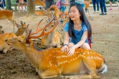 Nara Japan - Juli 26, 2017: Ung kvinna som trycker på en härlig lös hjort i Nara, Japan Nara är en viktig turism Arkivbilder
