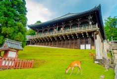 Free Nara, Japan - July 26, 2017: Wild Deer Eating The Grass With A Nigatsu-do, Todai-ji Temple Behind, In Nara Stock Photo - 99917580