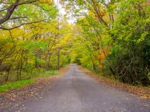 Nara, Japan - July 26, 2017: Beautiful autumn landscape with a desolate road, yellow autumn trees and leaves ,Colorful Royalty Free Stock Photos