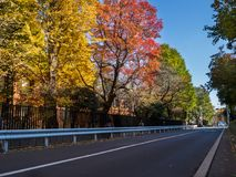 Nara, Japan - July 26, 2017: Beautiful view of autumn landscape in the road, with yellow autumn trees and leaves royalty free stock photo