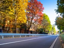 Nara, Japan - July 26, 2017: Beautiful view of autumn landscape in the road, with yellow autumn trees and leaves royalty free stock photos