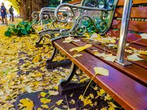 Nara, Japan - July 26, 2017: Close up of yellow leafs in a public chair, view of autumn landscape, with yellow autumn stock photos