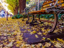 Nara, Japan - July 26, 2017: Close up of yellow leafs under a public chair, view of autumn landscape, with yellow autumn royalty free stock photo